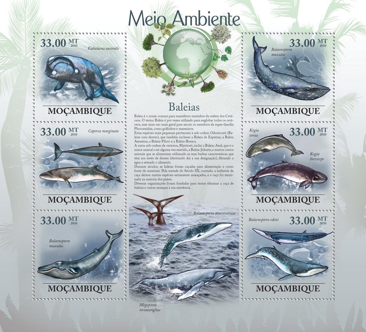Whales ( Eubalaena australis, Caperea marginata, Balaenoptera musculus, etc..) - Issue of Mozambique postage Stamps