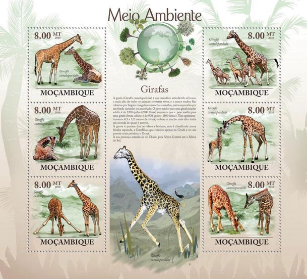 Giraffes (Giraffa camelopardalis). - Issue of Mozambique postage Stamps