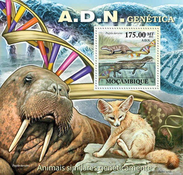 A.D.N. Genetics, Genetically Similar Animals, (Puijila darwini). - Issue of Mozambique postage Stamps