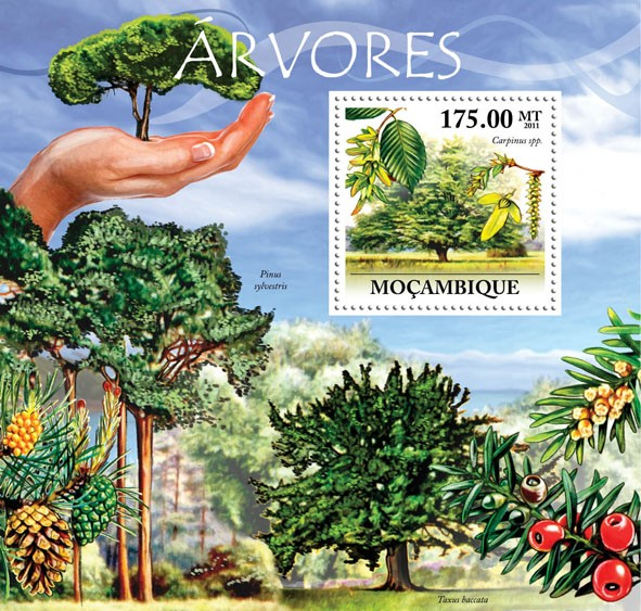 Trees, (Carpinus spp). - Issue of Mozambique postage Stamps