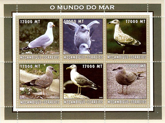 Herring gull  6 x 17000  MT - Issue of Mozambique postage Stamps