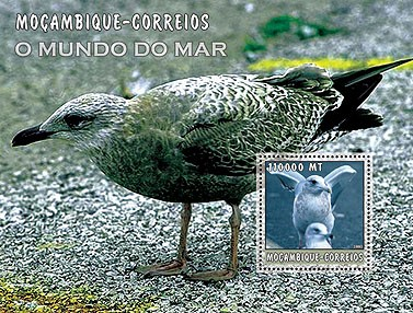 Herring gull   110000 MT  S/S - Issue of Mozambique postage Stamps