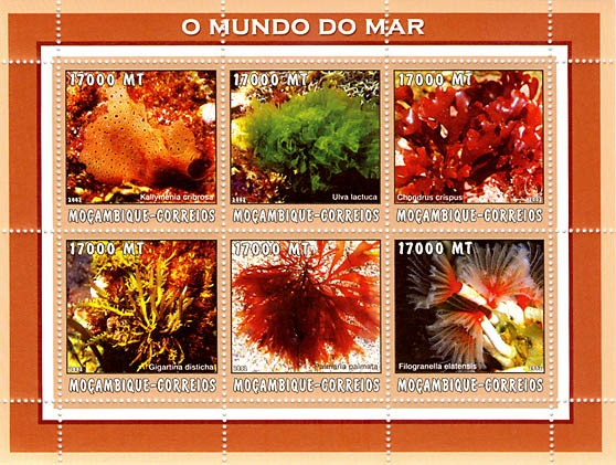 Sea Weed  6 x 17000  MT - Issue of Mozambique postage Stamps