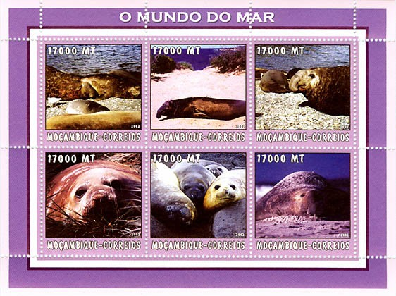 Sea Elephant 6 x 17000  MT - Issue of Mozambique postage Stamps