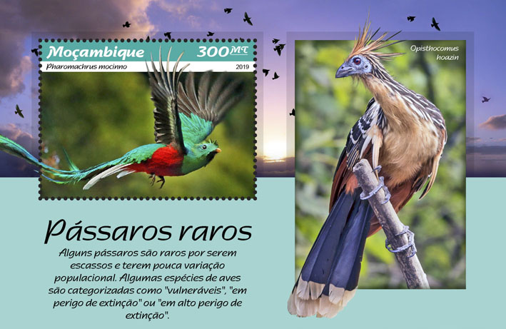 Rare birds - Issue of Mozambique postage Stamps