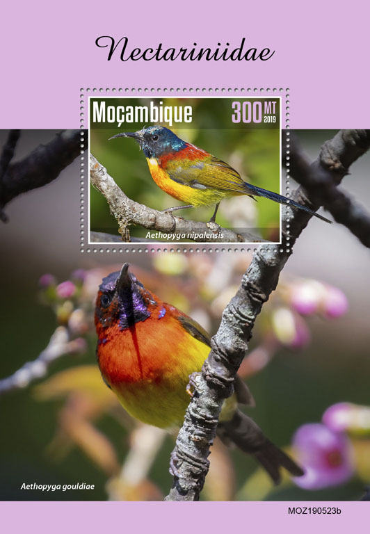 Sunbirds - Issue of Mozambique postage Stamps